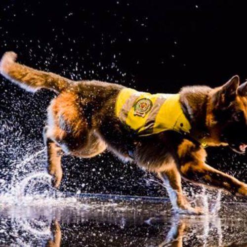 """Nat Geo Wild estrena la producción original """"Misión Canina"""""""