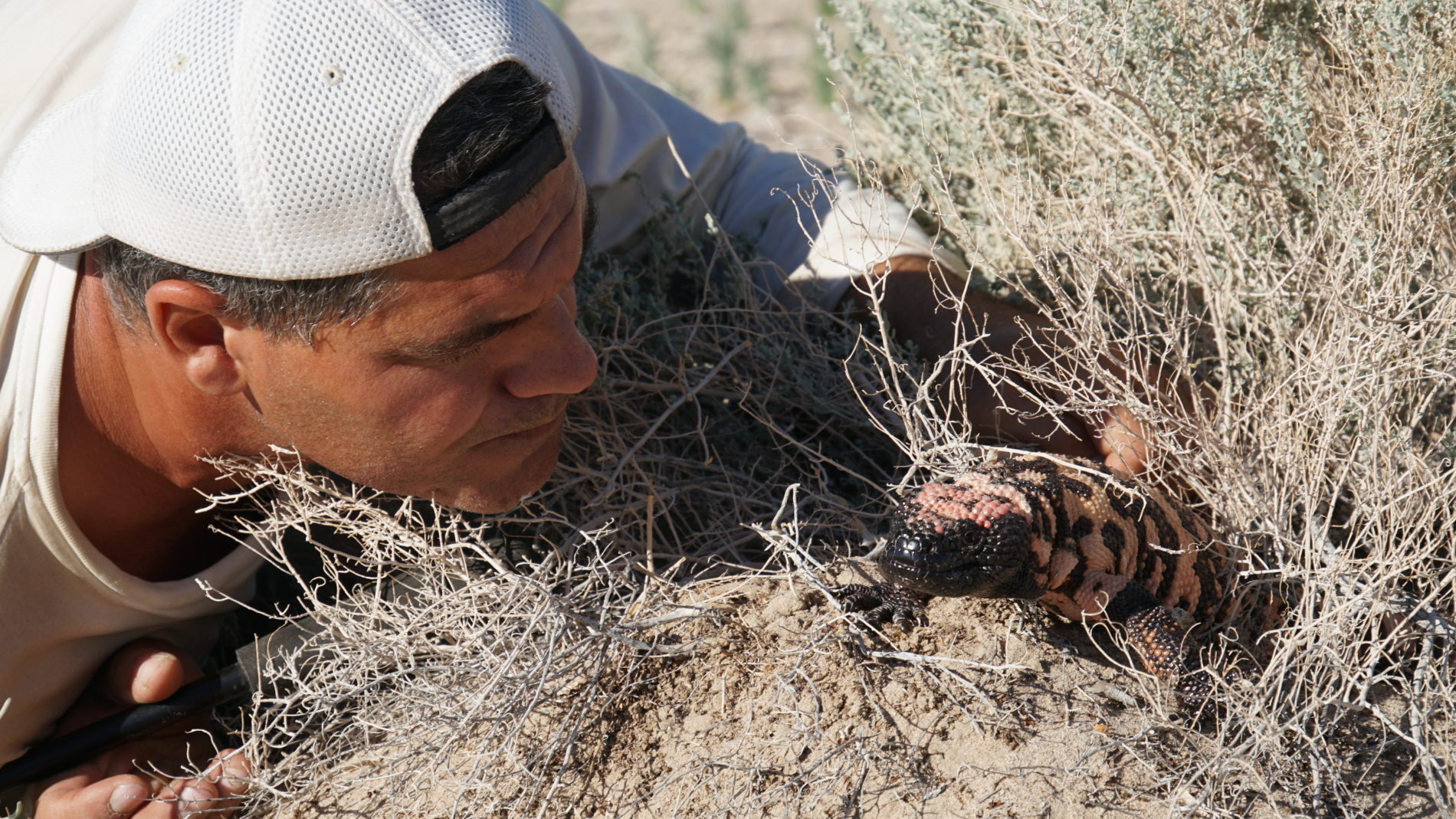 "ANIMAL PLANET ESTRENA ""WILD FRANK EN CALIFORNIA"", EL LADO SALVAJE DE CALIFORNIA"