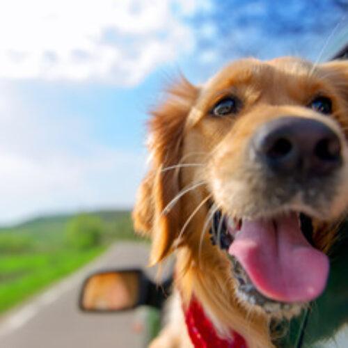 Niñera y spa canino, las actividades preferidas por los viajeros colombianos cuando viajan con su mascota