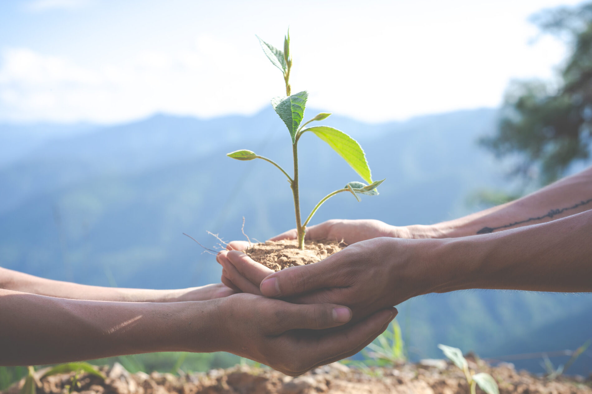 En el mes de la Tierra, adopta un árbol