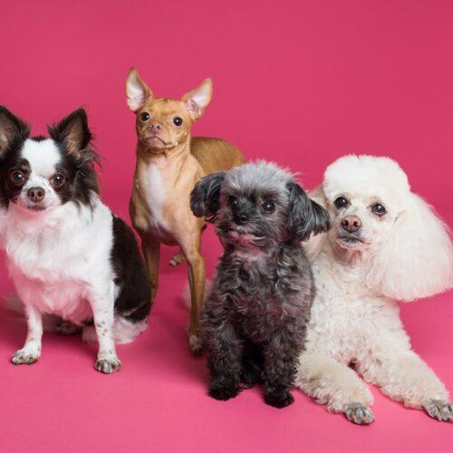 5 tips para crear contenido en Kwai sobre tu mascota, ¿te animas a intentarlo?